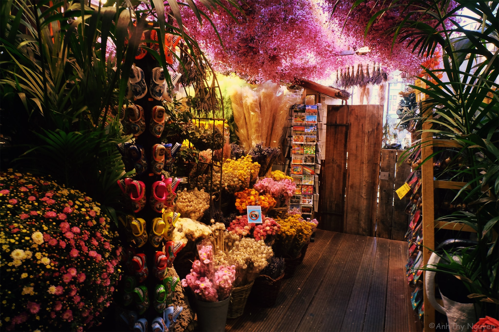 A closer look into the Flower market in Amsterdam